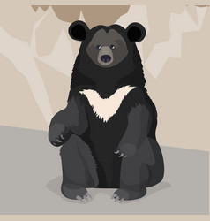 formosan or american black bear with white collar vector image