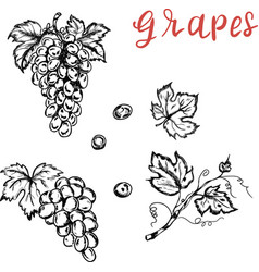 grapes food nature design isolated elements vector image