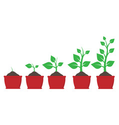 Growth plant in pot vector