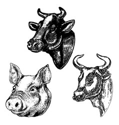 Hand drawn cow and pig heads isolated on white vector