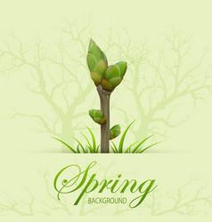 spring twig vector image
