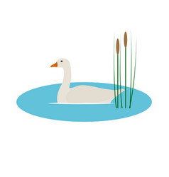 wild goose in pond with reeds vector image