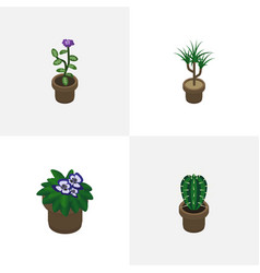 Isometric houseplant set of peyote flowerpot vector