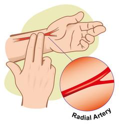 person measuring pulse artery radial vector image