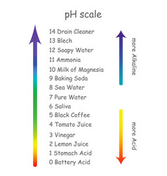 Ph scale with product names with different acidity vector