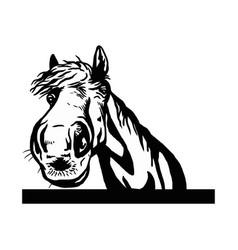 sad horse peeking out - face head isolated vector image