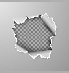 torn hole in sheet gray paper on transparent vector image