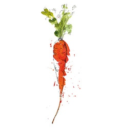 Watercolor of carrot vector image vector image