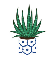 Agave home plant in a pot vector