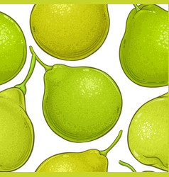 bergamot fruit pattern on white background vector image
