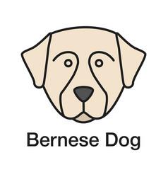 bernese mountain dog color icon vector image