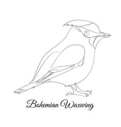 Bohemian waxwing bird type coloring vector