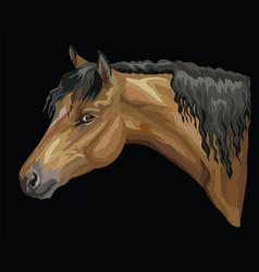 Colorful horse portrait-1 vector