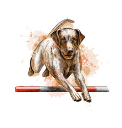 labrador retriever jumping vector image