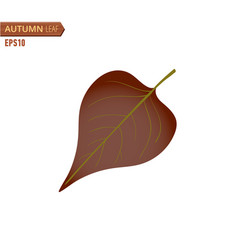 autumn lilac leaf isolated on a white background vector image