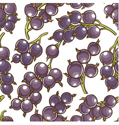 black currant berries pattern vector image