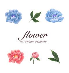 Bloom flower element design peony watercolor on vector