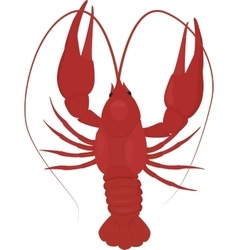 one boiled red crayfish crawfish vector image