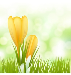 spring yellow flowers background vector image