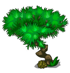 Tree with curved trunk and lush crown leaves vector