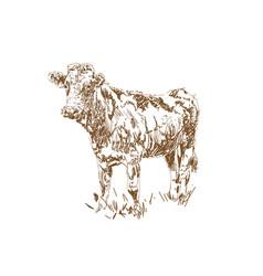 dairy farm farm animal cow graze in meadow vector image