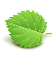 green leaf with small stem isolated cartoon vector image