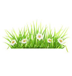label with green grass and daisies vector image