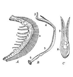 parts of fish gills vintage vector image