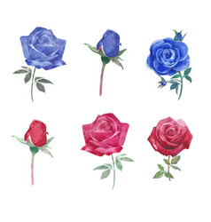 Set watercolor vibrant roses hand-drawn vector
