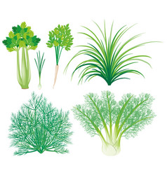 Vegetables with green leaves vector