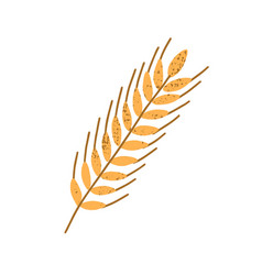 Yellow wheat spikelet with grains isolated vector