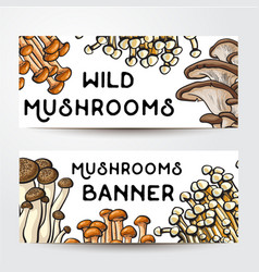banner design with various edible mushrooms and vector image