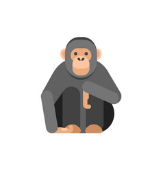 flat style of monkey vector image