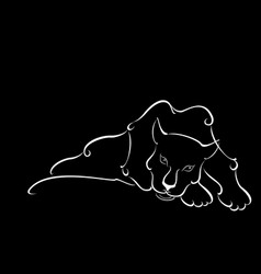 Lying sweetheart black panther in the night vector