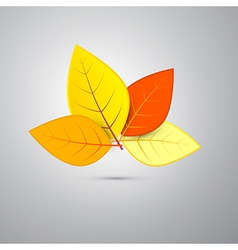 Colorful Orange Autumn Leaves Isolated on Grey vector image