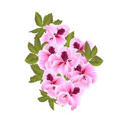 pelargonium geranium summer pink flowers vector image
