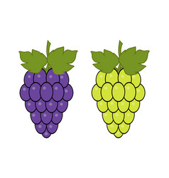 red and green grapes on white background grape vector image