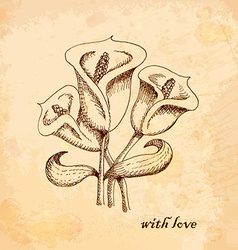 Vintage old background with calla lilies hand vector