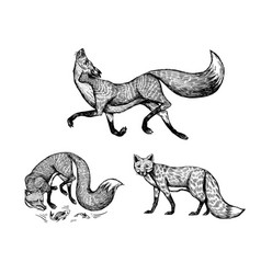 wild red fox set forest ginger animal flying and vector image