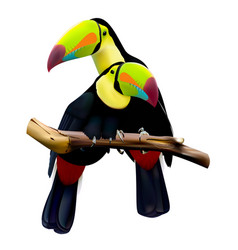 keel-billed toucans sitting on the branch vector image vector image
