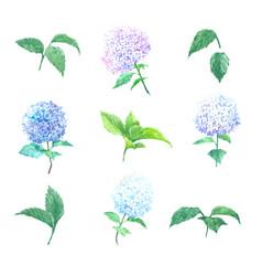 Bloom flower watercolor design multi color vector