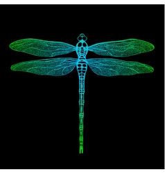 dragonfly2 vector image