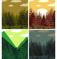 Four scenes of pine forests vector image
