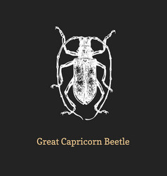 great capricorn beetle drawn vector image