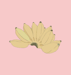 Pisang awak banana sketch vector