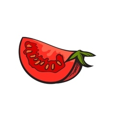 Sketch style drawing of ripe red tomato slice vector image