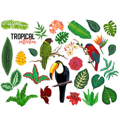 tropical collection with exotic flowers vector image