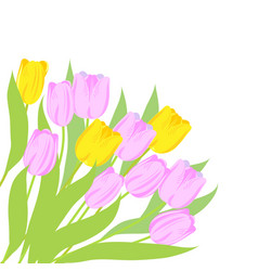 pink and yellow tulips vector image