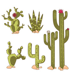 Cactus plants set desert among stone cartoon vector