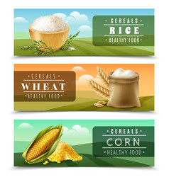 cereals banner set vector image